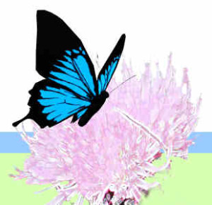 b-410574-The_animated_butterfly_flying